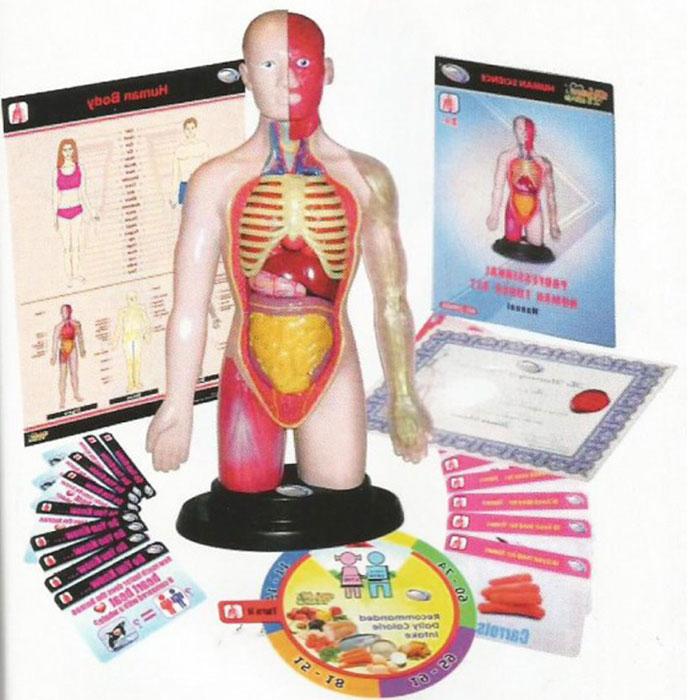 Juguetes científicos de Miniland Educational, el cuerpo humano ...