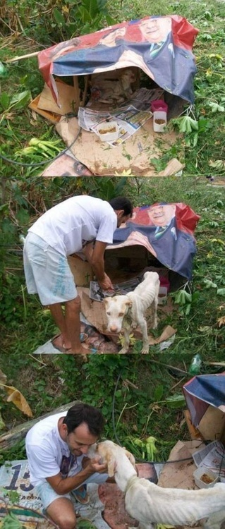 ... una historia muy tierna sobre un perrito abandonado con final feliz