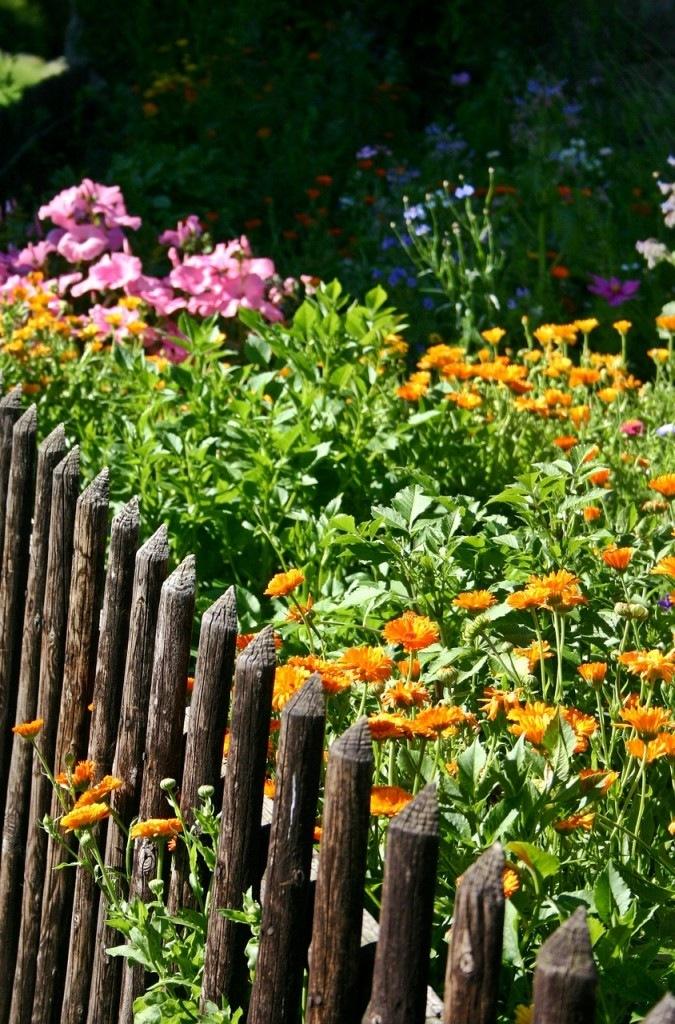 garden-497170_1280
