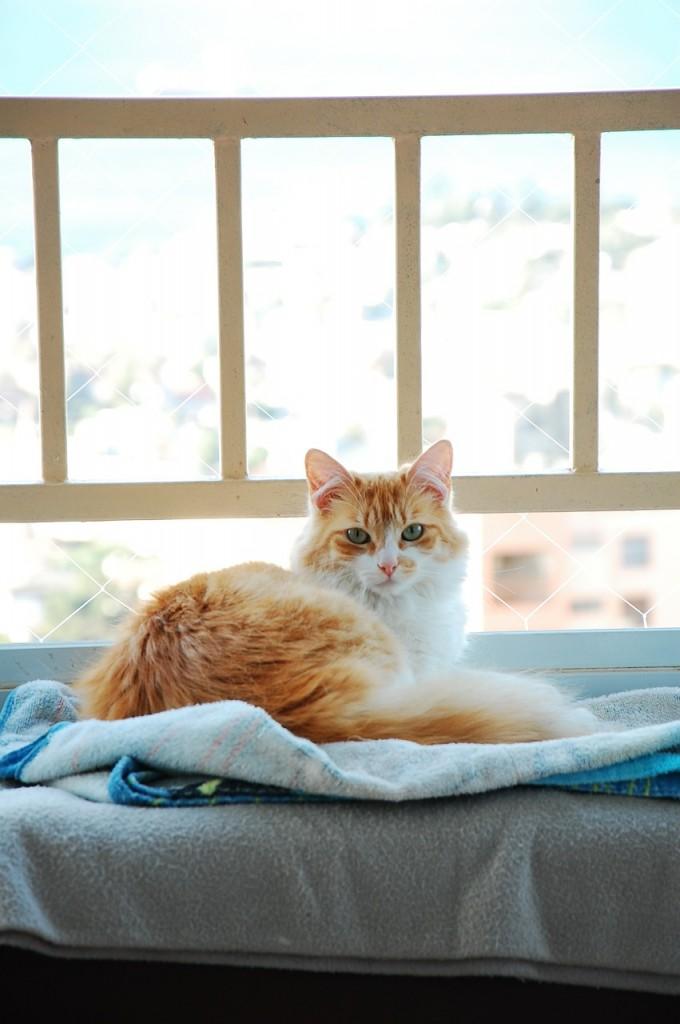 cat-594636_1280
